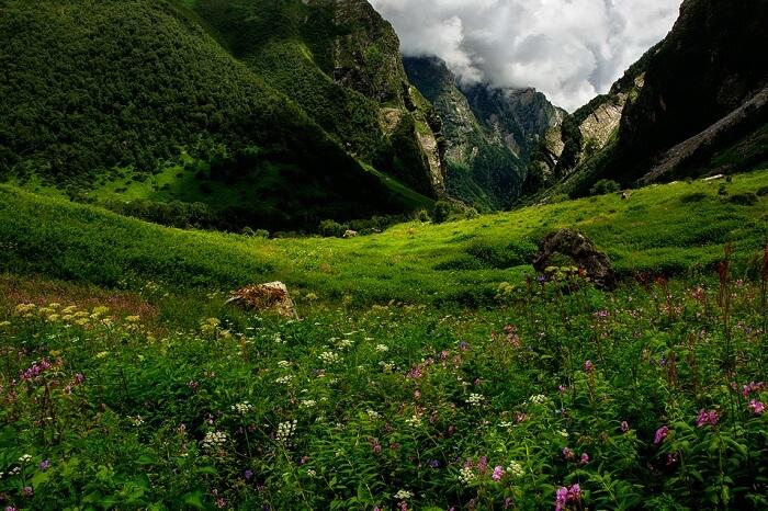 https://travelindiavacations.com/valley-of-flowers-treking/